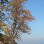 Herbst auf Rügen 1