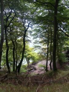 Buchenwälder Jasmund